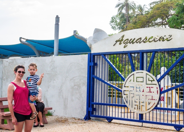 Aquascene is popular with the kids for feeding fish