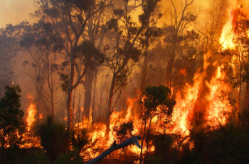 Bushfire - Photo Credit Justin Bianchini